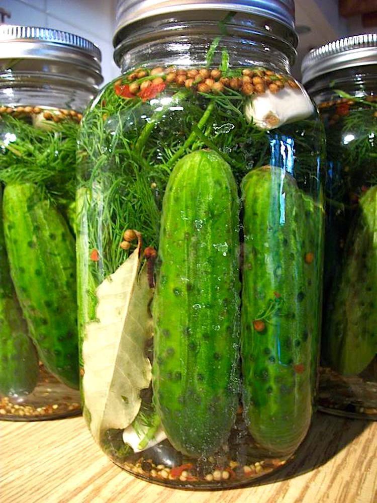 The Hirshon Authentic Jewish Half-Sour Dill Pickles – זויערע וגערקע
